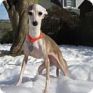 Adopt A Pet :: Malania (Molly)
