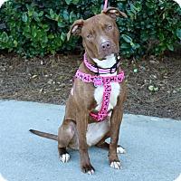 Adopt A Pet :: Quinn - Snellville, GA