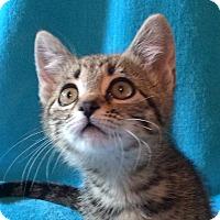 Adopt A Pet :: Gracie - Colorado Springs, CO