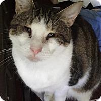 Adopt A Pet :: Layla - Baltimore, MD