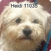 Adopt A Pet :: Heidi - baltimore, MD