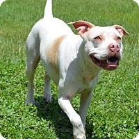 Adopt A Pet :: Biscuit - Ridgeland, SC