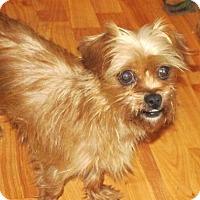 Adopt A Pet :: Opal - Rocky Mount, NC