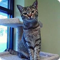 Adopt A Pet :: Maggie - Leonardtown, MD