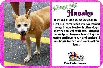 Shiba Inu Dog for adoption in Bealeton, Virginia - Hanako