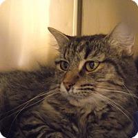 Adopt A Pet :: Churro *Petsmart GB* - Appleton, WI
