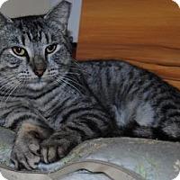 Adopt A Pet :: Slate - Ridgeland, SC