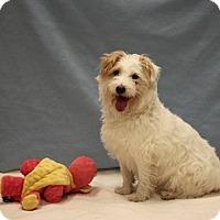 Adopt A Pet :: Maxine - Naperville, IL