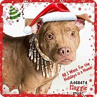 Adopt A Pet :: MAGGIE - URGENT! Moreno Valley - San Bernardino, CA