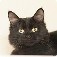 Adopt A Pet :: Blake - East Hartford, CT