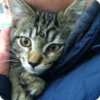 Adopt A Pet :: Clyde - Warren, OH