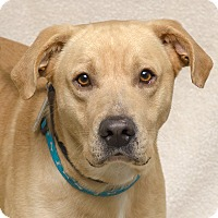 Adopt A Pet :: Ruger - Westfield, NY