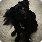 Adopt A Pet :: Martin