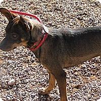 Adopt A Pet :: Lee - Post, TX