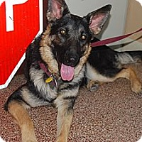 German Shepherd Dog/German Shepherd Dog Mix Dog for adoption in Fort Worth, Texas - Sissy