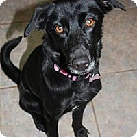 Adopt A Pet :: Sophie - Stilwell, OK
