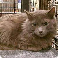Adopt A Pet :: Zane - Pittstown, NJ