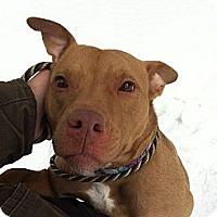 Adopt A Pet :: Phoebe - Shavertown, PA
