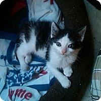 Adopt A Pet :: Gwen - Sterling Hgts, MI