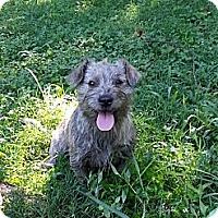 Adopt A Pet :: M.J. - Staunton, VA