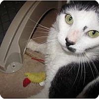 Adopt A Pet :: Lester - Pascoag, RI