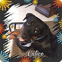Adopt A Pet :: Cal - Gilbert, AZ