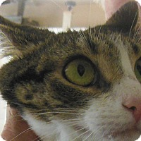 Adopt A Pet :: Samantha - N. Berwick, ME