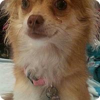 Adopt A Pet :: Toddie - San Diego, CA