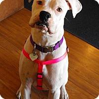 Adopt A Pet :: Lacey - Woodinville, WA