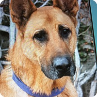 Adopt A Pet :: ELI VON ELLRICH - Los Angeles, CA