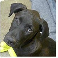 Adopt A Pet :: Pepsi - Springdale, AR