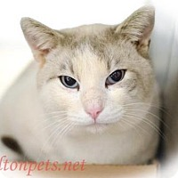 Adopt A Pet :: Romeo - Walton County, GA