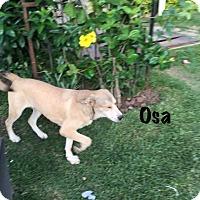 Adopt A Pet :: OSA - Calgary, AB