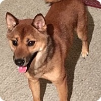 Adopt A Pet :: Jasper - Fairview Heights, IL