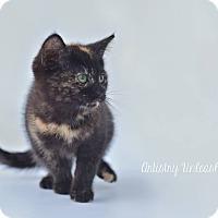 Adopt A Pet :: Ana - Millersville, MD
