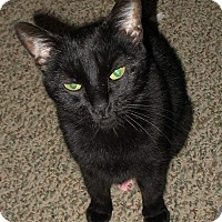 Adopt A Pet :: Lulu - Queensbury, NY