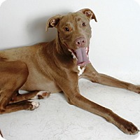 Adopt A Pet :: Mocha - Redding, CA