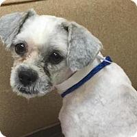 Adopt A Pet :: Bobby - Las Vegas, NV