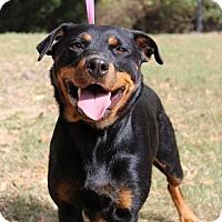 Adopt A Pet :: Gina - Conway, AR