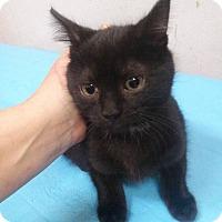 Adopt A Pet :: Meg - Northfield, OH