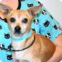 Adopt A Pet :: Pancho - Wildomar, CA
