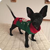 Adopt A Pet :: Washington - Carlsbad, CA