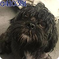 Adopt A Pet :: A410351 - San Antonio, TX