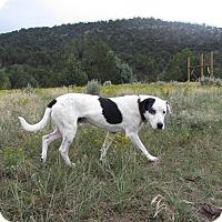 Adopt A Pet :: Buddy - Ridgway, CO