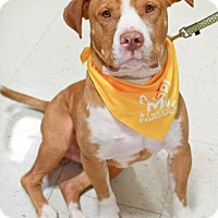Adopt A Pet :: RayRay (ADOPTION PENDING) - Fredericksburg, VA