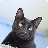 Adopt A Pet :: Sato - Chicago, IL