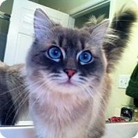 Adopt A Pet :: Charlie - Nolensville, TN