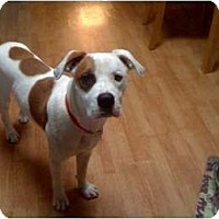 Adopt A Pet :: Chance - REDUCED! - Hagerstown, MD
