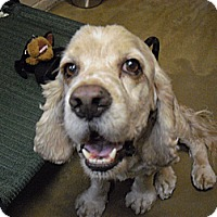 Adopt A Pet :: Gunner - Wickenburg, AZ