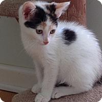 Adopt A Pet :: Starla - Monroe, GA